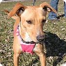 Adopt A Pet :: Dee Dee