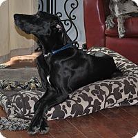 Adopt A Pet :: Lupita - O'Fallon, MO