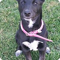 Adopt A Pet :: Jaide - Saskatoon, SK