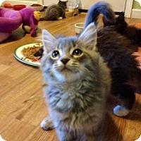 Adopt A Pet :: Hootie - Monroe, GA