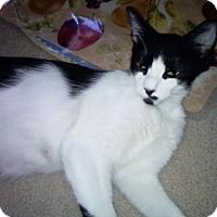 Adopt A Pet :: PolyPanda - North Highlands, CA