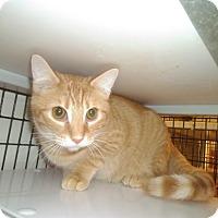 Adopt A Pet :: Sparkles - Muscatine, IA