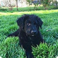 Adopt A Pet :: Valentino - Dayton, OH