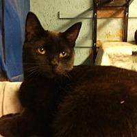 Adopt A Pet :: Chelsea - Brainardsville, NY