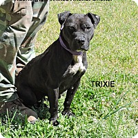 Adopt A Pet :: Trixie - Washington, GA