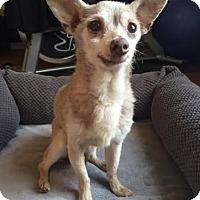 Adopt A Pet :: Salsa - Los Angeles, CA