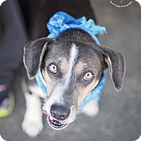 Adopt A Pet :: Buford - Kingwood, TX