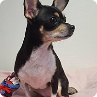 Adopt A Pet :: ChaCha-adopted - Schaumburg, IL