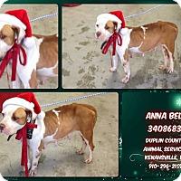 Adopt A Pet :: ANNA BELL - Kenansville, NC