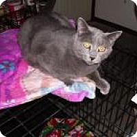 Adopt A Pet :: Aric - Sedalia, MO