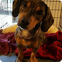 Adopt A Pet :: Susie-adoption pending - Hanna City, IL