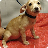 Adopt A Pet :: Sunni - Spring Valley, NY