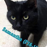 Adopt A Pet :: Samantha - Tiffin, OH