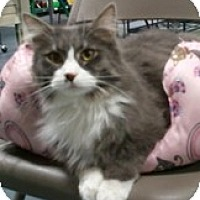 Adopt A Pet :: Anthony - Anchorage, AK