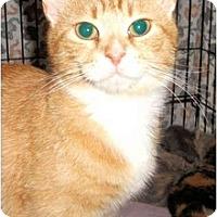 Adopt A Pet :: Dulce - Colmar, PA