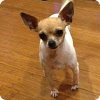 Adopt A Pet :: Thelma - San Francisco, CA
