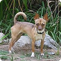 Adopt A Pet :: Daisy Doo - Santa Clarita, CA