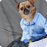 Adopt A Pet :: Tinker - Harrodsburg, KY