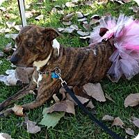 Adopt A Pet :: Brie - Natchitoches, LA