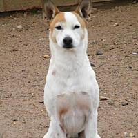 Adopt A Pet :: Johnny - Las Vegas, NV