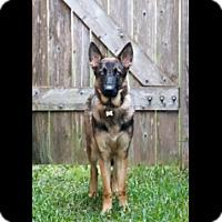 Adopt A Pet :: Donovan - Houston, TX