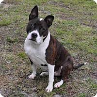 Adopt A Pet :: BRYNN - Naples, FL