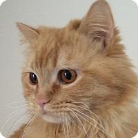 Adopt A Pet :: Frankie - Winchester, CA