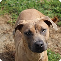 Adopt A Pet :: Halle - Yuba City, CA