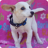 Adopt A Pet :: Wally - Loomis, CA