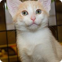 Adopt A Pet :: Jack - Irvine, CA