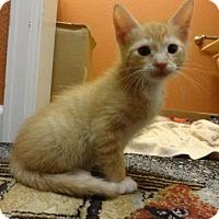 Adopt A Pet :: Nacho - Fort Collins, CO