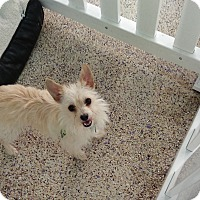 Adopt A Pet :: Fefe - Thousand Oaks, CA