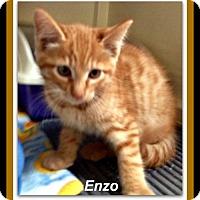 Adopt A Pet :: Enzo - Tombstone, AZ