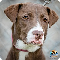 Adopt A Pet :: Melanie - Evansville, IN