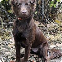 Adopt A Pet :: EDEN - Westminster, CO
