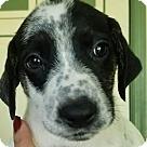Adopt A Pet :: Lisa's Rocky