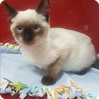 Adopt A Pet :: Twix - yuba city, CA