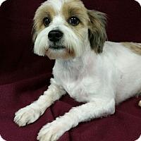 Adopt A Pet :: Taffy Madison - Urbana, OH