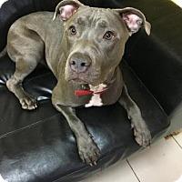 Adopt A Pet :: Cam - Philadelphia, PA