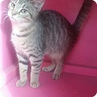 Adopt A Pet :: TIGER - Ocala, FL