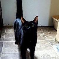 Adopt A Pet :: Jett - Fairmont, WV