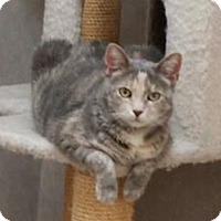 Adopt A Pet :: Shelly - Manchester, MO