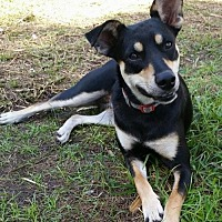 Adopt A Pet :: FARAH-15 Hollywood, FL - Lithia, FL