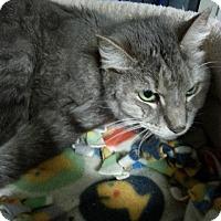 Adopt A Pet :: Sparky Girl - Windsor, CT