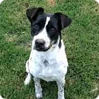 Adopt A Pet :: Daisey - Houston, TX