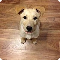 Adopt A Pet :: Willow - Saskatoon, SK