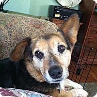 Adopt A Pet :: Warren ADOPTED - kennebunkport, ME