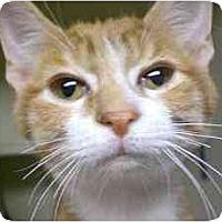 Adopt A Pet :: Pluto - Lombard, IL