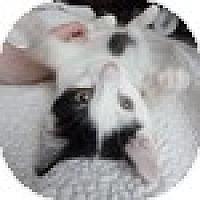 Adopt A Pet :: Mynxi - Vancouver, BC