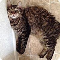 Adopt A Pet :: Galahad - Gilbert, AZ